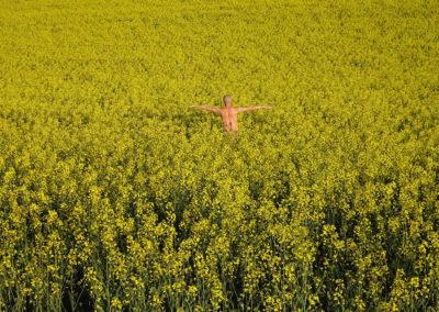 Landscapes - horizontale jaune