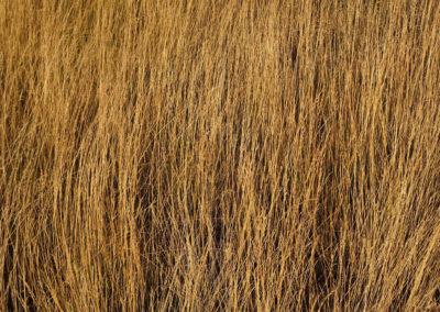 Nu - les herbes jaunes - 2017 - diptyque 1
